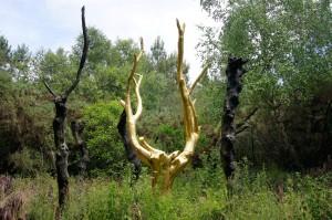 L'arbre d'or, symbole de la protection de la nature